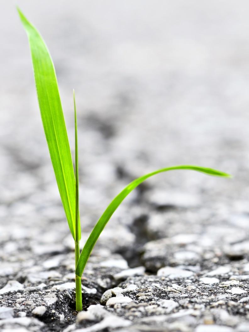 Gras wächt durch Asphalt - Erstarrung überwinden mit körperorientierter Traumatherapie in Bonn