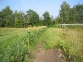 Unser Gemüseakker