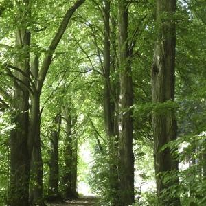 Lichtenberger-Wald in Eggenfelden;Foto: CMRembeck