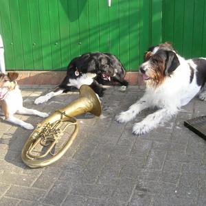 Dogdance beim Sommerfest