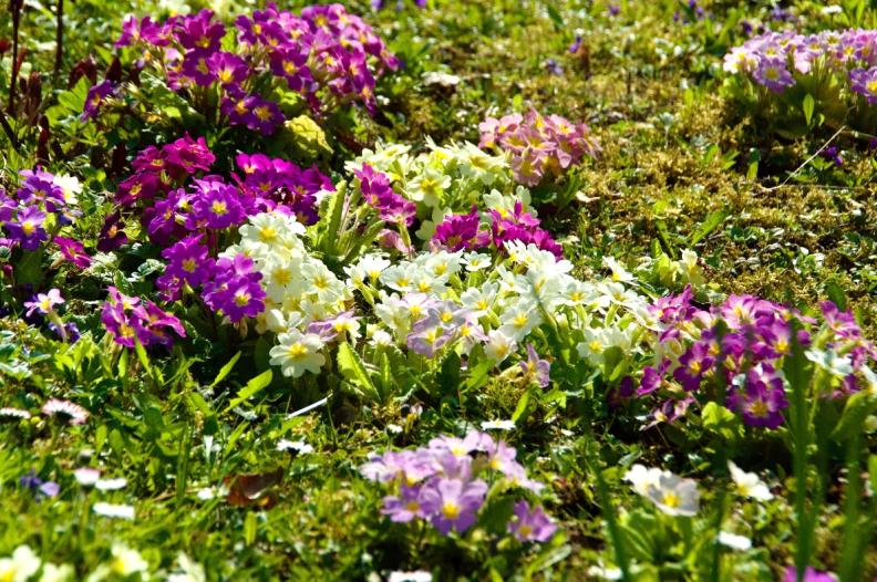 Frühlingskraft im Garten